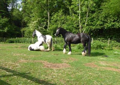 kent-shepherds-hut-horses